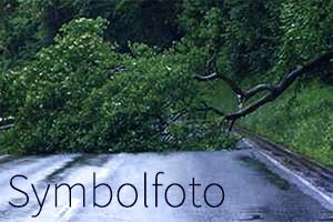 Symbolfoto: Baum über Straße